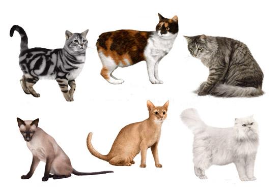 Окрас кошек с фотографиями и названиями